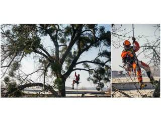 Спил аварийных деревьев в Харькове - Харків