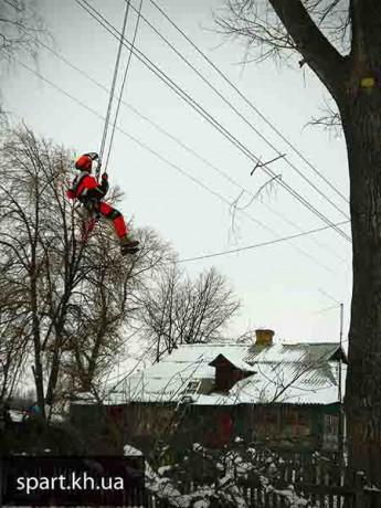 Спил аварийных деревьев в Харькове - Харків 2