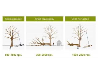 Обрезка деревьев в Харькове - Харьков